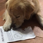 Yes, LEO eats math HW